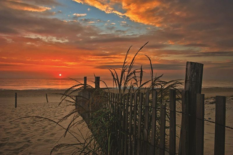 ADJ_2_Path_Sunrise_Goldenrod_3958-14-800-800-80 The Elements of Spring - Delaware Beach Life
