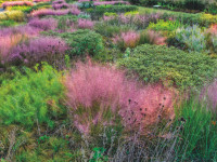 Feature Botanic Gardens DJI 0937 AuroraHDR2019 edit AirMagic Processed adj cmyk